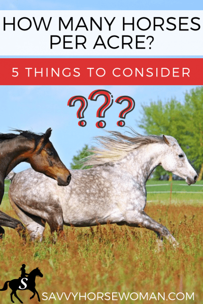 How Many Horses Per Acre? 5 Things To Consider When Choosing a Horse Property- Savvy Horsewoman