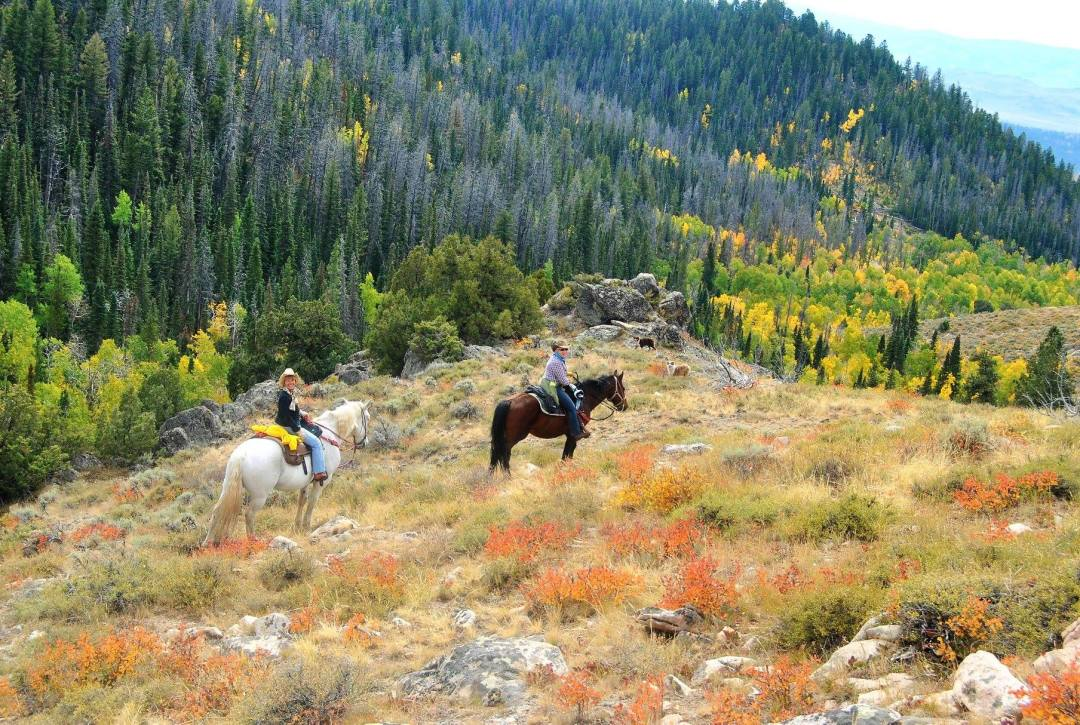 Plan your Dude Ranch Vacation! Includes working ranch holidays usa, best family dude ranch vacations usa, cattle drive holidays usa and more!