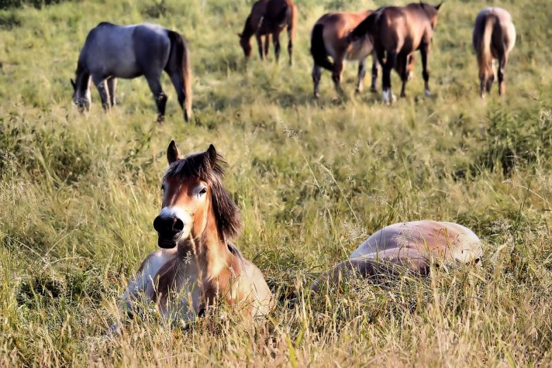 Did you know any of these bizarre horse facts? Test your knowledge!