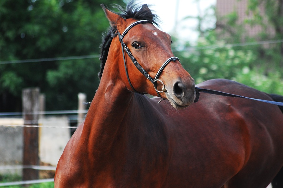 How To Help a Horse With Anxiety - Learn the causes, symptoms and treatments of anxiety In horses. Watch for these nervous horse signs!
