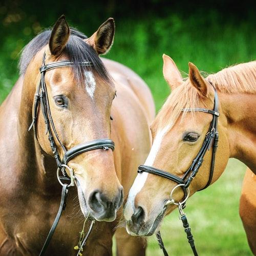 horse bits