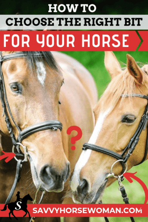 How to Choose A Horse Bit