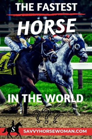 Who is the fastest horse in the world?