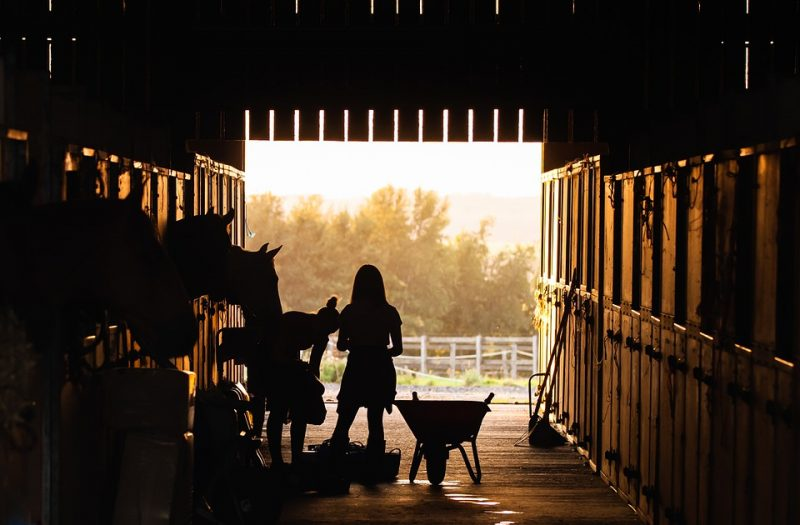 Natural Pest Control for Horse Stables