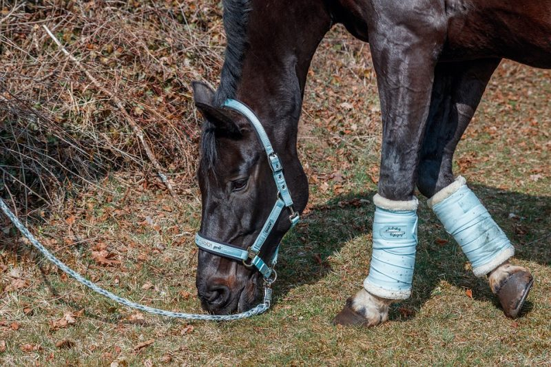 Clicker Train Your Horse to Stop Grazing