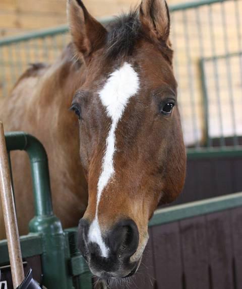 Horse Cost Case Study: October 2019 Update