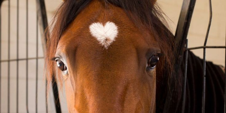 Helpful Horse Hints