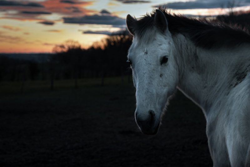 Horse Cost Case Study: December 2019