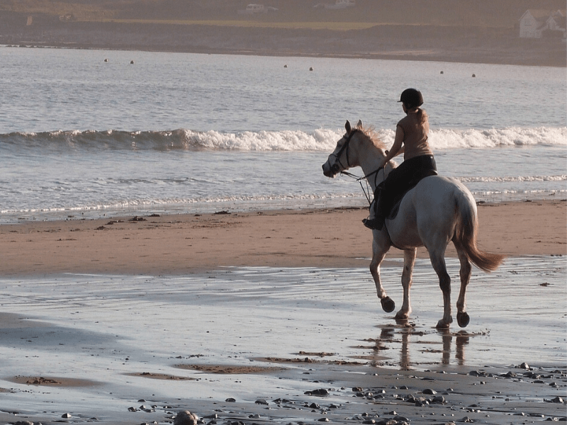 Trail riding tips on horseback for any terrain