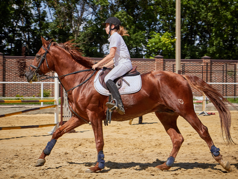 How to Canter a Horse in 7 Simple Steps