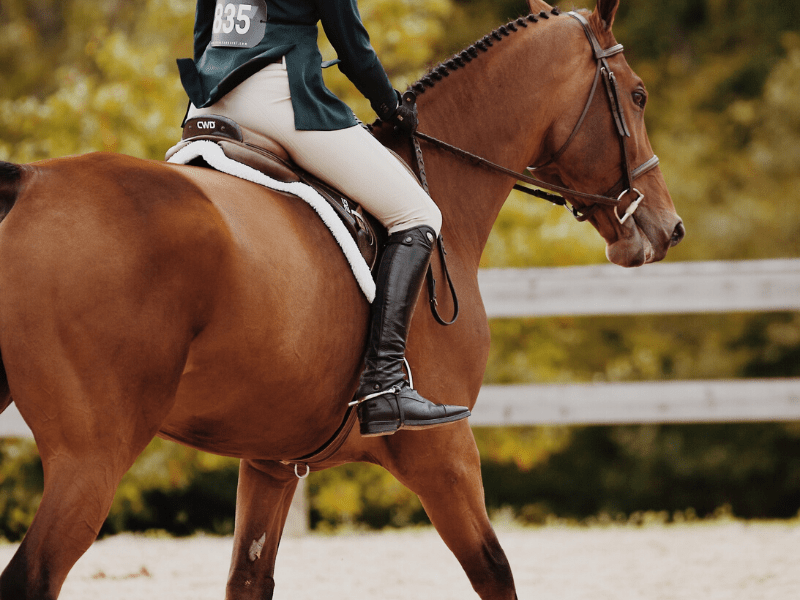 7 Steps to a Perfect Canter