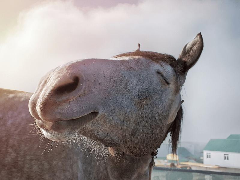 How to Keep a Backyard Horse Happy
