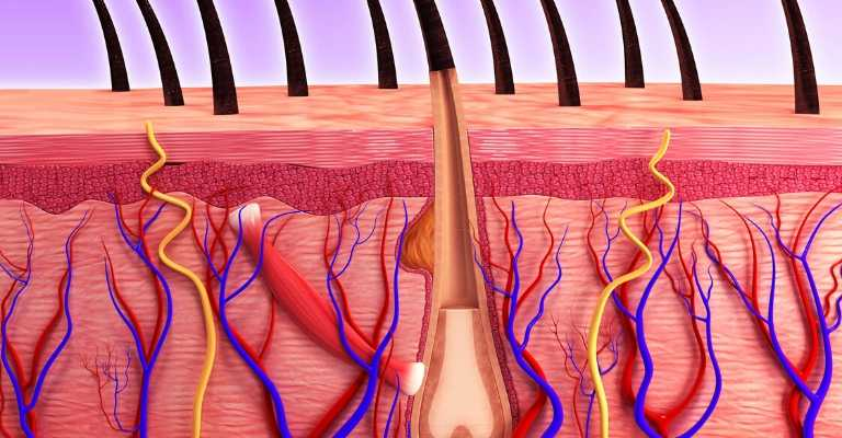 cancer skincare_skin cells