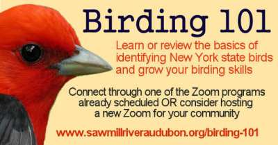 Birding101-Zoom-o