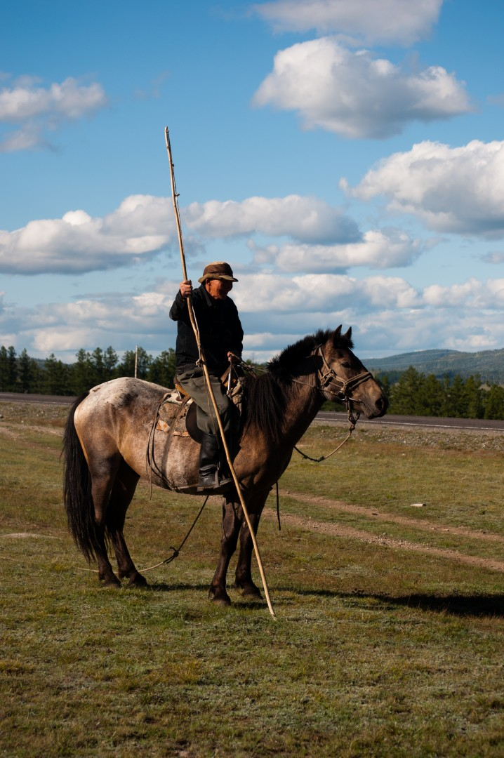 Image result for Tannu Tuva horse
