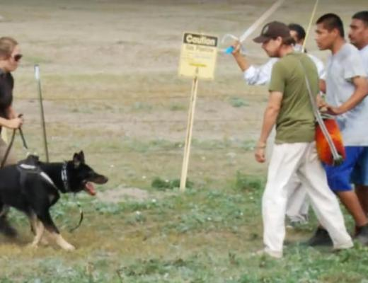 This screen shot from a Democracy NOW! video purports to show security dogs used Sept. 3, 2016, to drive back protestors who had overrun the Dakota Access Pipeline worksite north of Cannon Ball, N.D. Images Courtesy Democracy NOW!