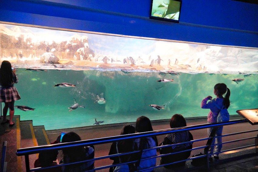 海生館餵企鵝