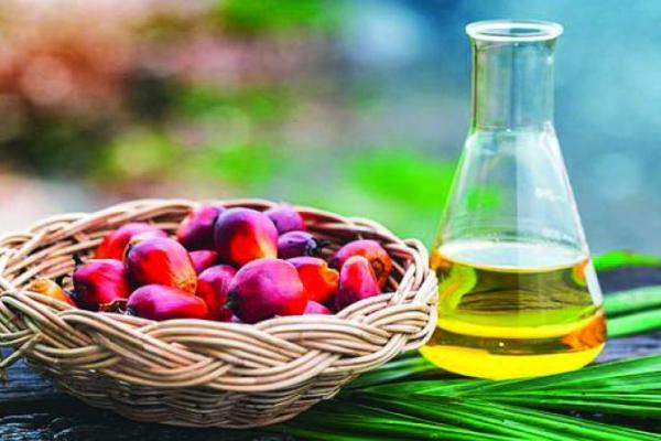 Health & Nutrition Benefits of Palm Oil