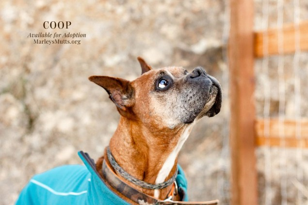 IMG_4569_Coop_Profile_Looking_Up_2048x1365