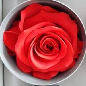 rosa rossa stabilizzata