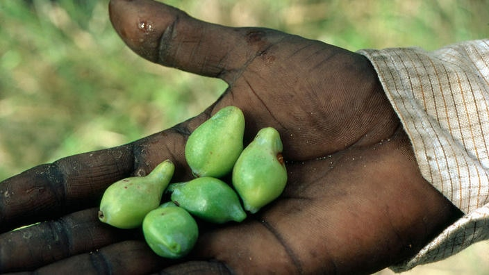 10 Bush Medicines That Have Been Curing People For Generations Nitv