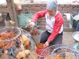 17.2.2017 Việt Nam cảnh báo nguy cơ cúm gia cầm từ Trung Cộng – Anh