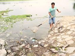 22.3.2017 Cá chết bất thường nổi trắng hồ thủy lợi ở tỉnh Bình Dương
