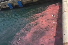 4.4 Lại xuất hiện dải nước đỏ tại cảng Sơn Dương – Anh