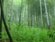 Hình WWF