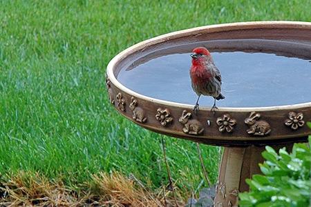 birdie0512.jpg