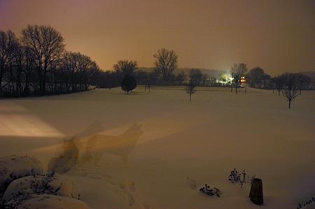 snowdog1208.jpg