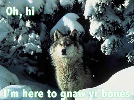 wolf0221.jpg