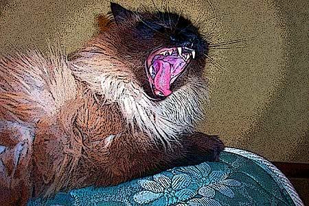 yawncat0302.jpg
