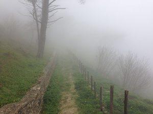 Sentiero del bosco di Erice nella nebbia