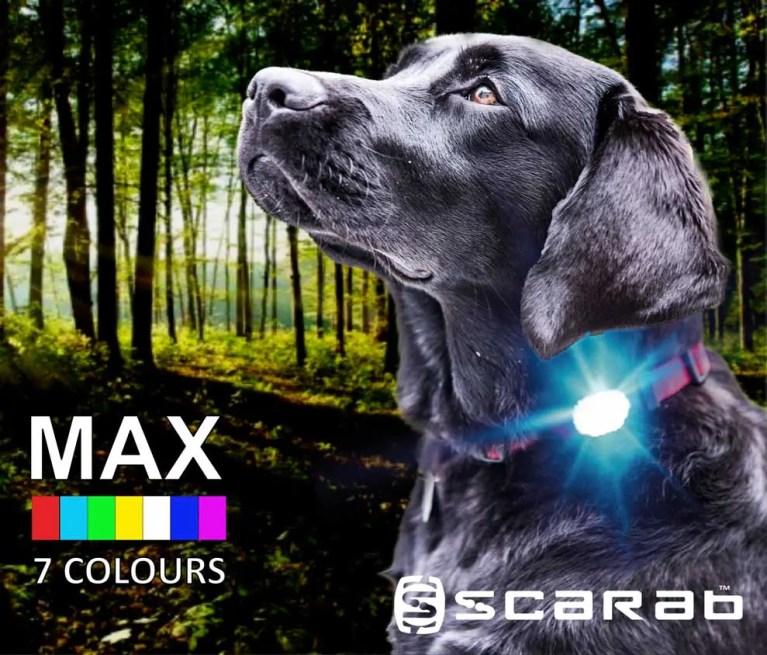 Scarab Beacon MAX Dog Light