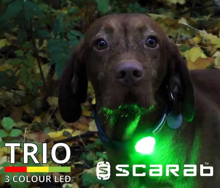 Scarab Beacon TRIO Dog Light