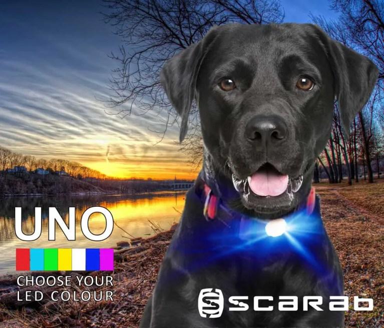 Scarab Beacon UNO Dog Light