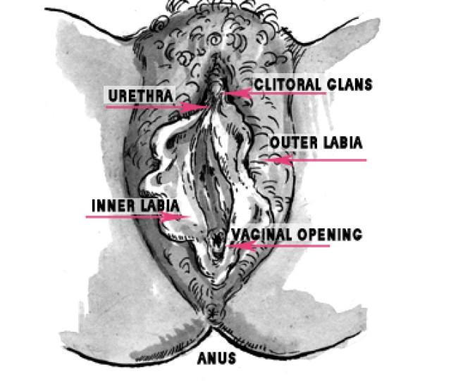 Vulva Not Vagina