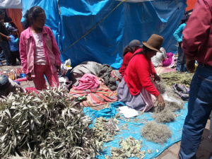 selling medicinal plants