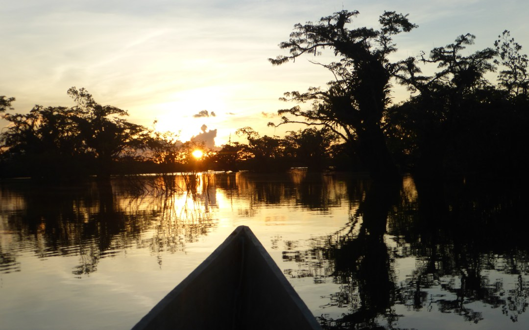 The Amazonian Jungle – Part 2