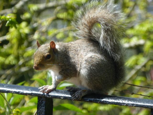 photo walk through Bristol: wildlife