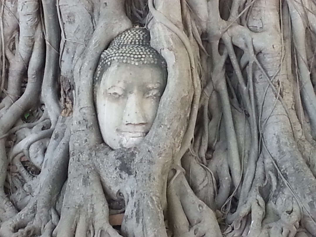 Buddha head in Ayutthaya