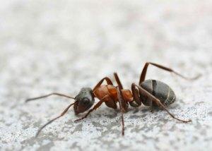Il formicaio - La Scatola Nera blog letterario