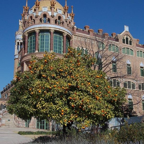Der Garten des Sant Pau in Barcelona