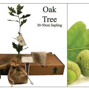 Oak  memorial tree for ashes