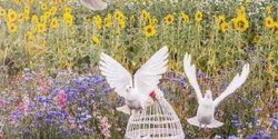 doves released at a scattering ceremony