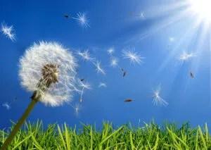 Allergy Tips & Tricks
