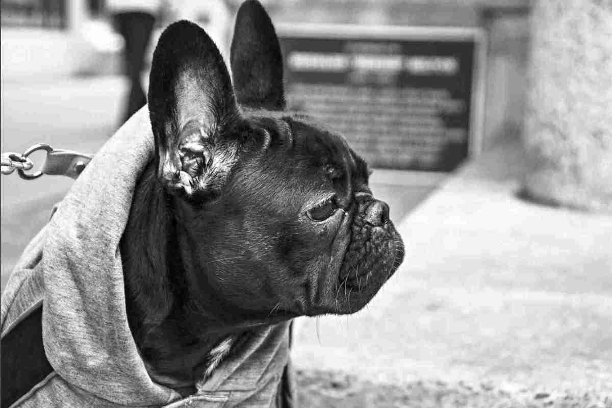 PETS-dog2.jpg?fit=1200%2C800