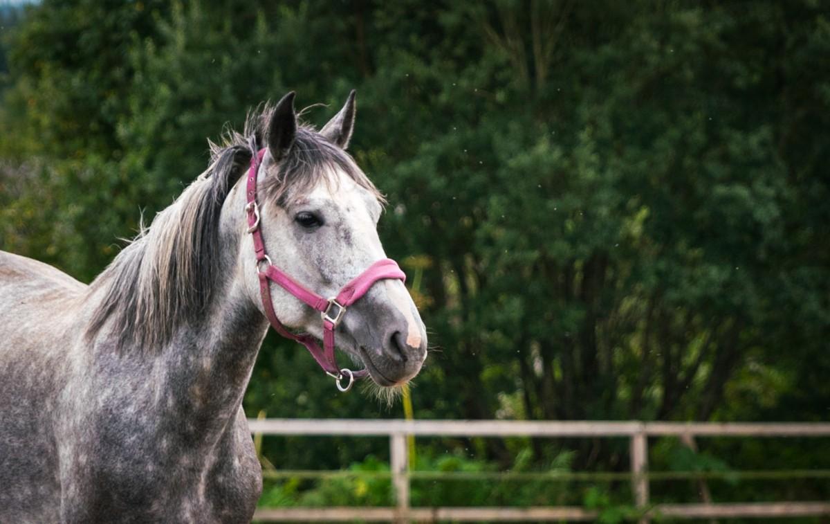 Aperçu sur les prestations de pension pour cheval
