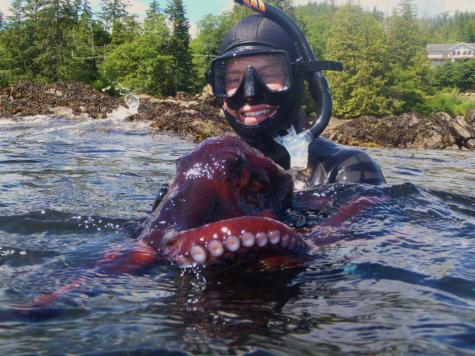 Crabb holds a Pacific red octopus while leading a snorkel trip for a group of tourists in Alaska.